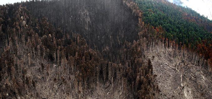 ბორჯომის ტყეში ხანძრის სალიკვიდაციო სამუშაოები გრძელდება