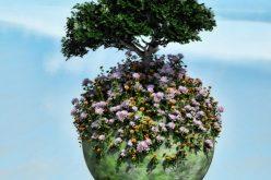 """""""დარგე ერთი ხე დღესვე"""" – სოციალური პროექტი"""