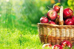 განათლებისა და მეცნიერების სამინისტრომ სკოლებში ვაშლის შესასყიდად ელექტრონული ტენდერი გამოაცხადა.