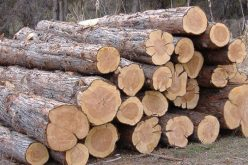 ხე-ბუჩქნარის უკანონოდ გაჩეხვის 27 ფაქტი გამოავლინეს.