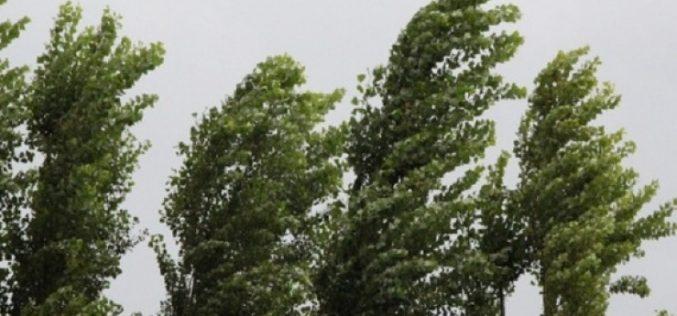 საქართველოში დღეს ძლიერი ქარია.