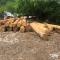 ხე-ტყის უკანონო მოპოვებისა და ტრანსპორტირების 1121 ფაქტი გამოვლინდა