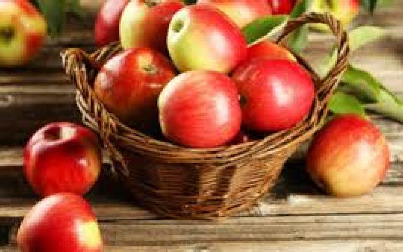 1-ლი აგვისტოდან 25 ოქტომბრამდე პერიოდში, 3 005 ტონა ვაშლის ექსპორტი განხორციელდა